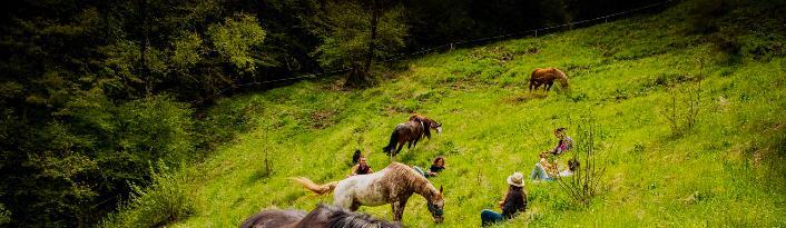Incontro con i cavalli